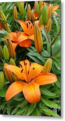 Metal Print featuring the photograph Orange Flowers by Rose Wang