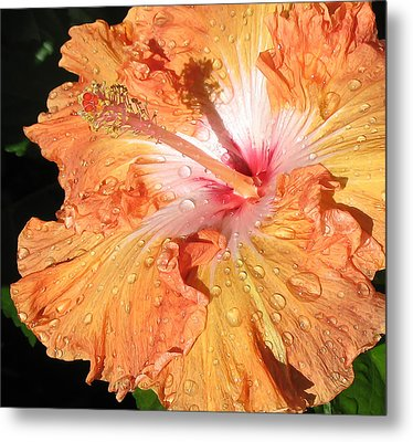 Orange Hibiscus After The Rain Metal Print by Connie Fox