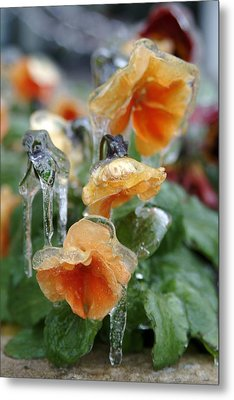 Orange Iced Pansies Metal Print