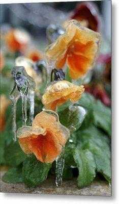 Orange Iced Pansies Metal Print