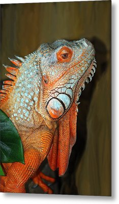 Metal Print featuring the photograph Orange Iguana by Patrick Witz