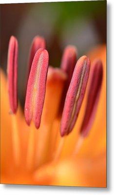 Orange Lilly Flower Metal Print