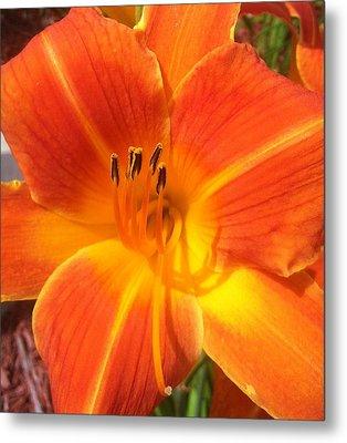 Orange Lily Metal Print by Saribelle Rodriguez