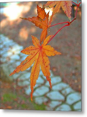 Orange Maple Leaves Metal Print by Lorna Hooper