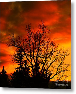 Orange Morning Metal Print by Marjorie Imbeau