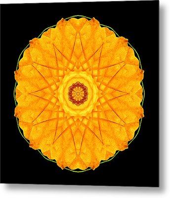 Orange Nasturtium Flower Mandala Metal Print by David J Bookbinder