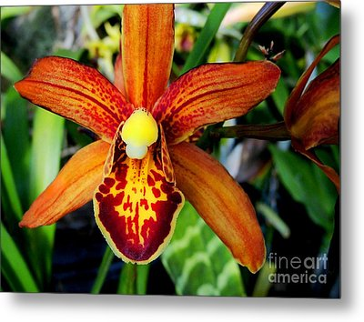 Orange Orchid Metal Print by Kristine Merc