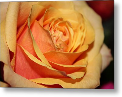 Metal Print featuring the photograph Orange Passion by Judy Palkimas