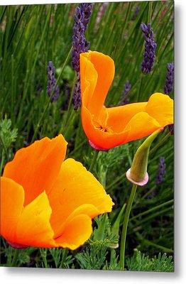 Orange Poppies With Lavender Metal Print