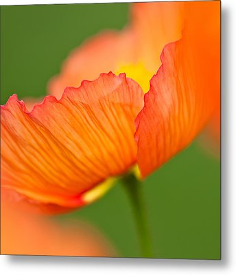 Orange Poppy Metal Print