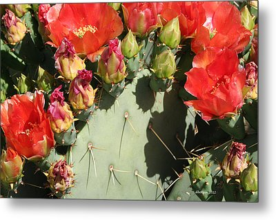 Metal Print featuring the photograph Orange Prickly by Dick Botkin