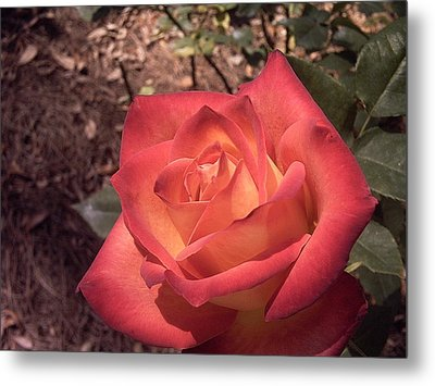 Metal Print featuring the photograph Orange Rose by Michele Kaiser