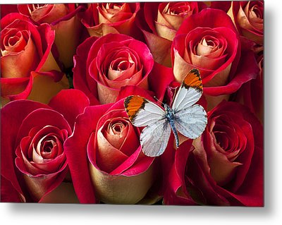 Orange Tip Butterfly Metal Print by Garry Gay