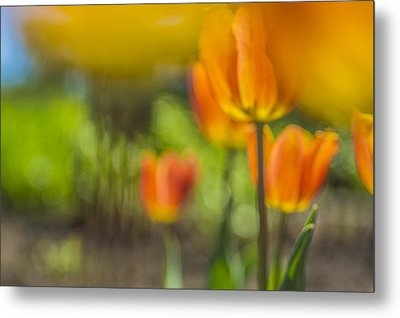 Orange Tulip On Fire Metal Print by Arkady Kunysz