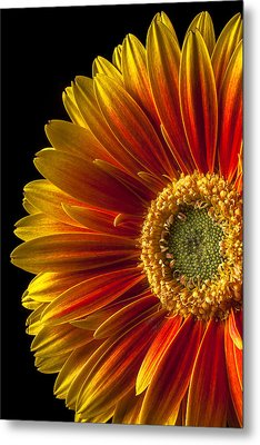 Orange Yellow Mum Close Up Metal Print by Garry Gay