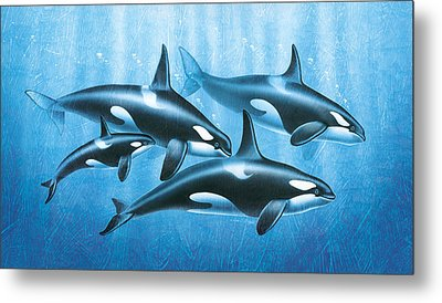 Orca Group Metal Print by JQ Licensing