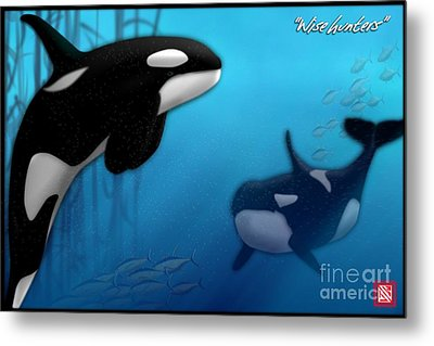 Orca Killer Whales Metal Print by John Wills