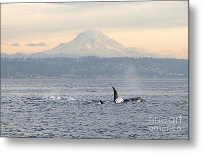 Orcas And Mt. Rainier Metal Print by Gayle Swigart