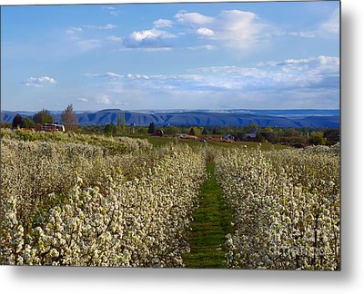 Orchard Country Spring Metal Print