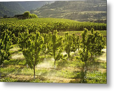 Orchards In The Mist Metal Print by Maria Janicki
