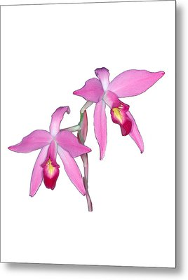 Orchid 1-1 Metal Print by Andy Shomock