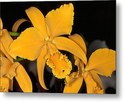 Orchid 5 Metal Print by Andy Shomock