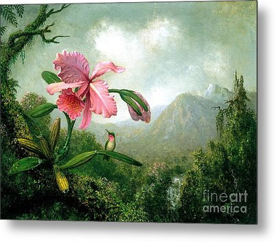 Orchid And Hummingbird Metal Print by Pg Reproductions
