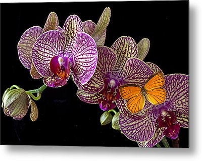Orchid And Orange Butterfly Metal Print