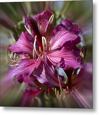 Orchid Blur Metal Print by Penny Lisowski