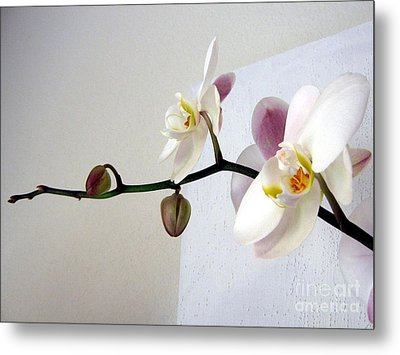 Orchid Coming Out Of Painting Metal Print by Barbara Yearty