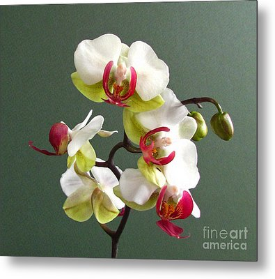 Orchid Metal Print by Deborah Johnson