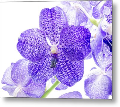 Orchid Flower Metal Print by Boon Mee