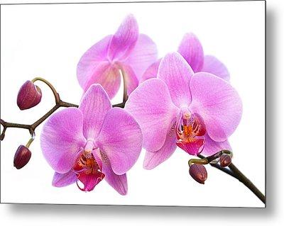 Orchid Flowers II - Pink Metal Print by Natalie Kinnear