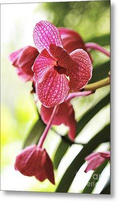 Orchid II Metal Print by Pamela Gail Torres