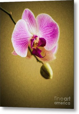Orchid In Digital Oil Metal Print