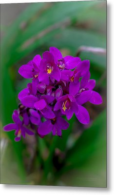 Orchid In Motion Metal Print