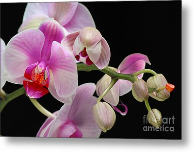 Orchid Metal Print by JRP Photography