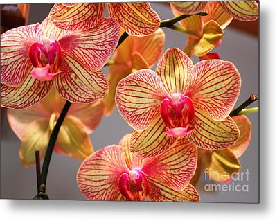 Orchid Metal Print by Judy Palkimas