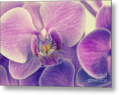 Orchid Lilac Dark Metal Print by Hannes Cmarits