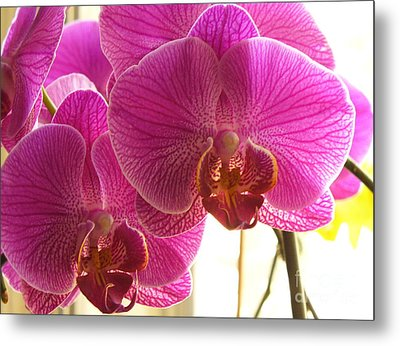 Metal Print featuring the photograph Orchid by Lingfai Leung