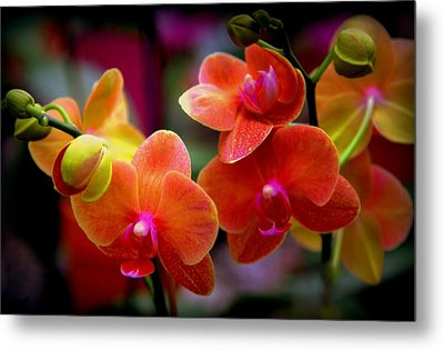 Orchid Melody Metal Print by Karen Wiles