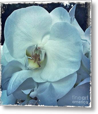 Orchid Metal Print by Nina Prommer