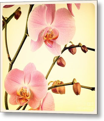 Orchid Old Photo Metal Print by Jane Rix