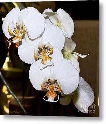 Orchid Phalaenopsis Dutch Lady Metal Print by Susan Wiedmann