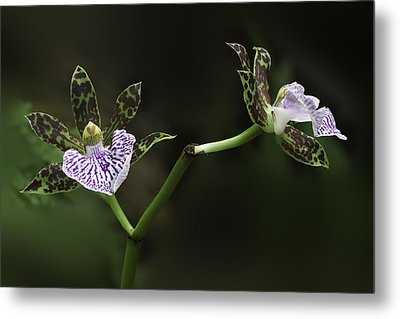 Metal Print featuring the photograph Orchid by Ram Vasudev