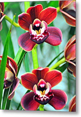Orchid Rusty Metal Print by Marty Koch