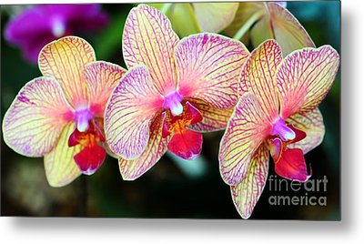 Orchid Trio Metal Print by Kathleen Struckle