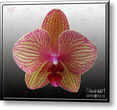 Metal Print featuring the photograph Orchid  With Stars by Donna Brown