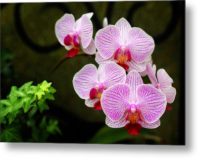 Orchids And Ivy Metal Print by Trina  Ansel