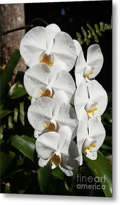 Orchids Anna Metal Print by The Art of Alice Terrill